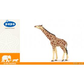 Girafe tête levée - La vie sauvage