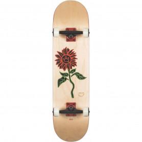 "Skateboard Street 8"" G2 Natural - Globe"